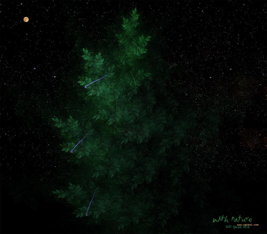 늘푸른나무.jpg