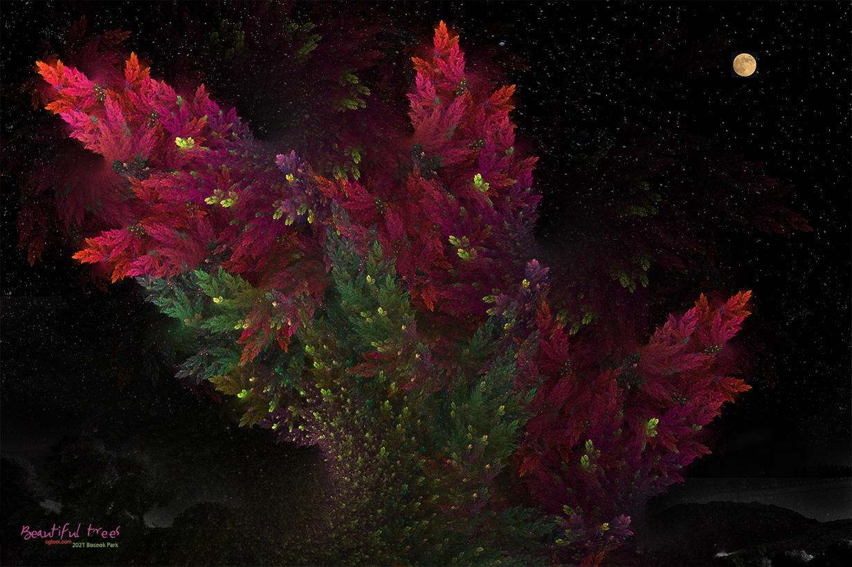 낙엽송-3.jpg