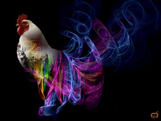 chicken1.JPG