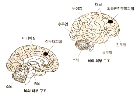 brain2.jpg